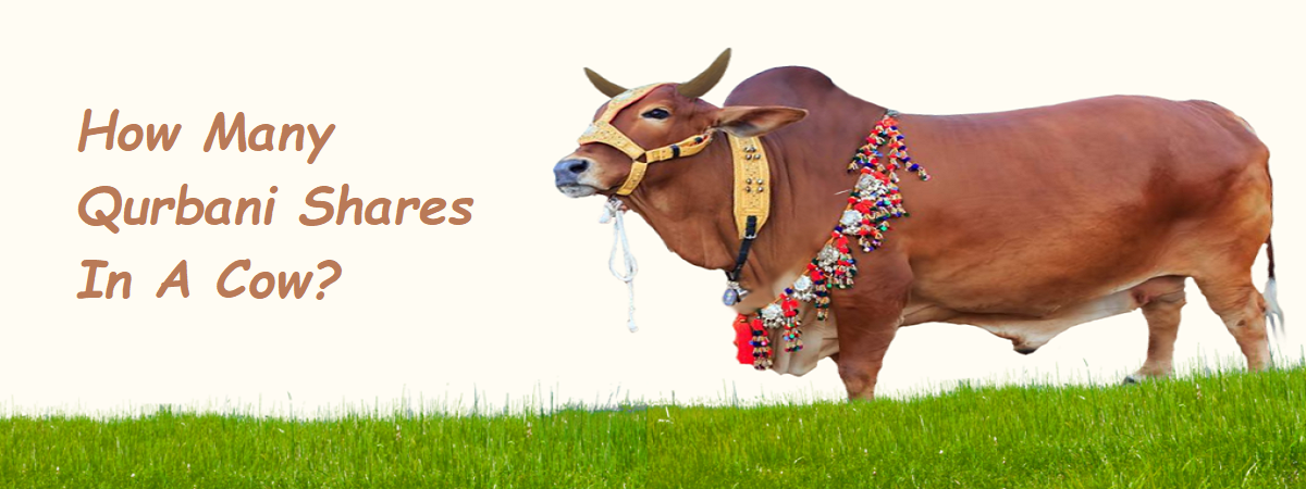 qurbani shares in a cow